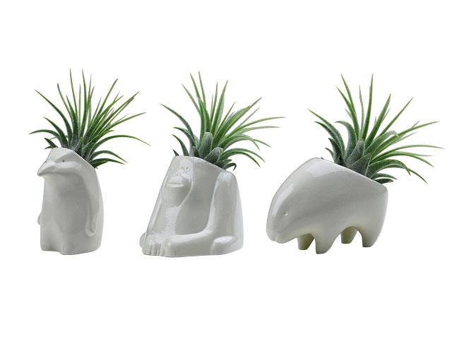 Plant's animal